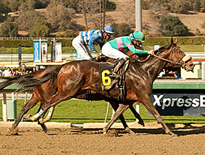 Blingo wins the 2014 San Antonio.