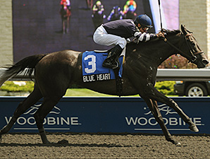 Blue Heart wins the 2012 Bison City Stakes.
