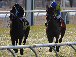 Blues Street (LEFT) with Javier Castellano aboard wins the Grade III $100,000 Fair Grounds Handicap at Fair Grounds.