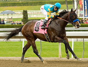 Bodemeister Maiden win 02/11/2012