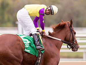 Bold Affair wins the 2012 Maryland Million Distaff.