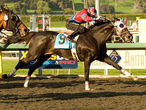 Bold Chieftain wins the 2010 Sunshine Millions Classic.