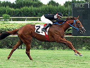 Bon Accord wins the 2013 Calder Turf Dash Stakes