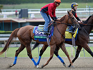 Book Review jogs at Santa Anita for the Breeders' Cup.