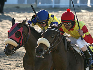 Bouquet Booth (right) wins the 2011 Silverbulletday.