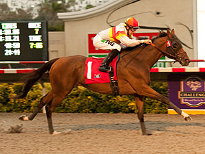 Bourbon Bay wins the 2011 Cougar II.
