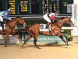 Bradester wins the 2014 Mineshaft Handicap.