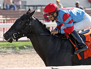 Brave Dave wins the 2012 Birdonthewire Stakes.