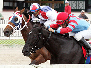 Brave Dave wins the 2012 Jack Price Juvenile.