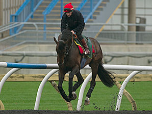 Brown Panther - Woodbine, October 16, 2014.