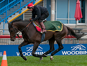 Brown Panther - Woodbine, October 18, 2014.
