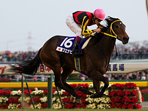 Buena Vista in the 2010 Japan Cup.