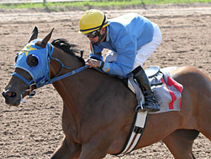 Burning Warrior wins the 2013 Louisiana Cup Juvenile Stakes.