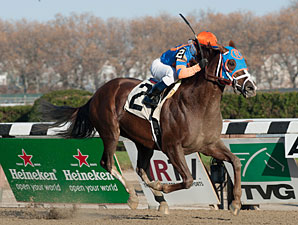 Caixa Eletronica wins the 2012 Fall Highweight.