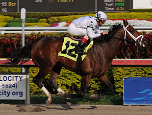 Cal Nation Maiden Win 02/05/11