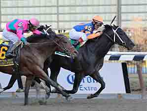 Calibrachoa wins the 2012 Tom Fool.