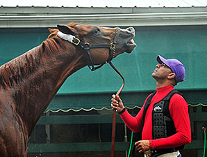 California Chrome gets a bath at Pimlico, May 15, 2014