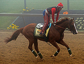 California Chrome jogs in the fog at Pimlico.