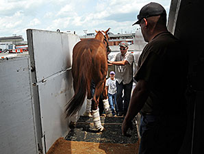 Kentucky Derby winner California Chrome heads up the ramp to his flight to Baltimore backwards. May 12, 2014
