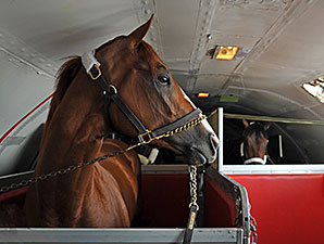 (May 12, 2014) Kentucky Derby winner California Chrome gets settled in to his stall on Tex Sutton flight KFS725, for the short flight to Baltimore