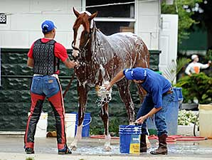 California Chrome - Belmont Park, June 4, 2014.