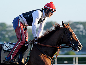 California Chrome jogs at Belmont Park May 25.