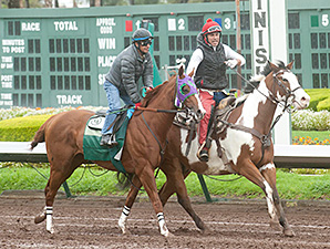 California Chrome works with Victor Espinoza aboard at Los Alamitos Feb. 2, 2014.