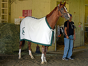 California Chrome at Belmont Park June 3, 2014.