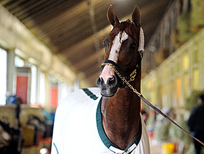 California Chrome - Belmont Park, May 22, 2014.