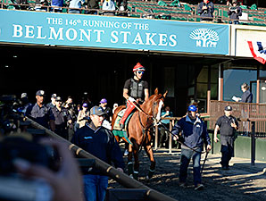 California Chrome at Belmont Park on June 6, 2014.