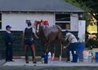 Belmont Stakes Day Bath for California Chrome