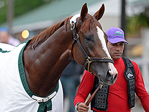 California Chrome - Churchill Downs, April 29, 2014