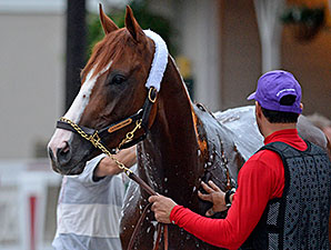 California Chrome - Churchill Downs, April 29, 2014.
