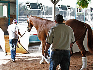 California Chrome loads onto a transport van en route to the Preakness Stakes.