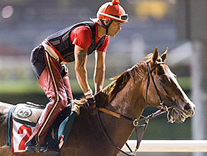 California Chrome on the track at Meydan March 23.