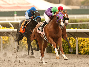 California Chrome wins the 2013 Graduation Stakes.