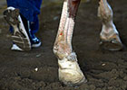 Post Belmont Stakes News Update for June 8, 2014