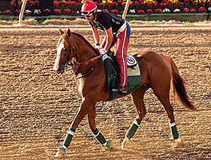 California Chrome - Pimlico, May 13, 2014.