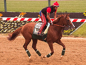 California Chrome - Pimlico, May 14, 2014.