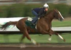 California Chrome Work: February 27, 2015