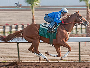 California Chrome Work, April 19, 2014.