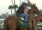 California Chrome Work: Los Alamitos 8/15/2014