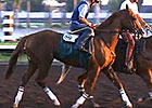 California Chrome Work and Interviews 8/29/14