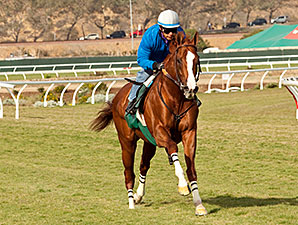 California Chrome breezes at Del Mar Nov. 23.