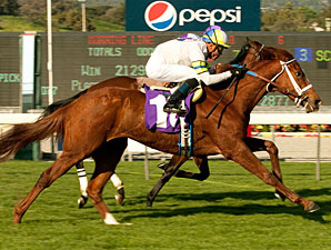 Cambina wins the 2011 La Habra Stakes.