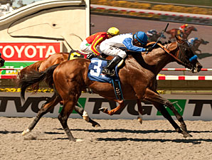 Capital Account wins the 2012 Pat O'Brien.