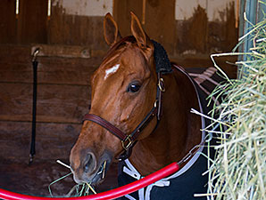 Caracortado - 2013 Breeders' Cup, October 30, 2013