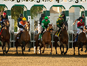 Caracortado wins the 2011 Sunshine Millions Turf.