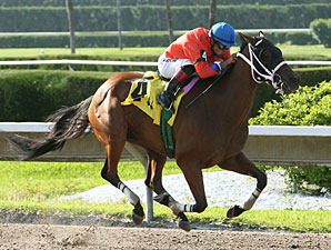 Cash Rules wins the 2012 Sumter Stakes.