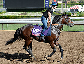 Caspar Netscher preps for the 2014 Breeders' Cup.